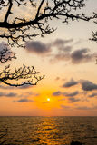 Silhouette of branch tree with sunset over sea Royalty Free Stock Image