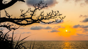 Silhouette of branch tree with sunset over sea Royalty Free Stock Photo
