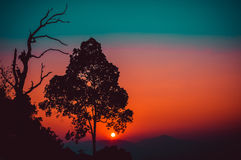 Silhouette branch tree at sunset. Royalty Free Stock Photos
