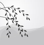 Silhouette of the Branch of a willow Royalty Free Stock Images