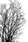 Silhouette Branches. Image of grunge silhouette branches Royalty Free Stock Image