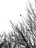 Silhouette of branches Stock Images