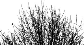 Silhouette of branches Stock Image
