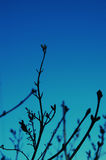 Silhouette of branches. Flora against blue sky Stock Photo