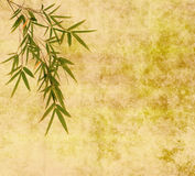 Silhouette of branches of bamboo on paper backgr Stock Photos
