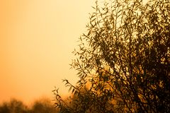 Silhouette of branches and leaves of big tree against the background of evening sky Royalty Free Stock Images