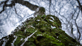 Silhouette branches. Tree bark in focus and silhouette branches Stock Photo