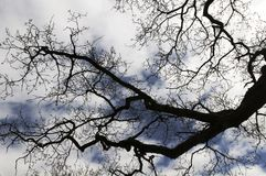 Silhouette of branches of a tree royalty free stock photo