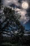 Silhouette of the branches of trees against the night sky with f Stock Photos