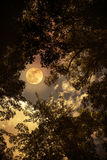 Silhouette the branches of trees against night sky with full moo Stock Photos