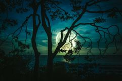 Silhouette branches of trees against sky and full moon above sea stock photo