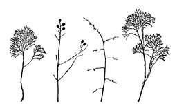 Branches of trees and bushes. Silhouette of branches of trees and bushes. Vector illustration royalty free illustration