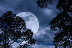 Silhouette the branches of trees with full moon on tranquil natu Royalty Free Stock Photos