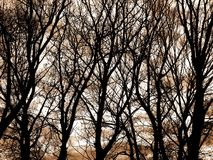 Silhouette branches - trees Royalty Free Stock Photo