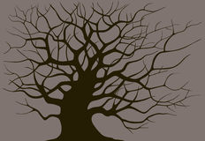 Silhouette branching of an old tree. On a dark background Stock Photo
