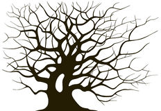 Silhouette branching of an old tree. On a light background Stock Photos