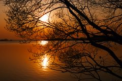 Silhouette of branching tree over lake at sunset. In spring evening royalty free stock images