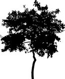 Silhouette of broad-leaved tree. Illustration with broad-leaved tree silhouette isolated on white background Royalty Free Stock Photography