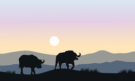 Silhouette of bull in hills Royalty Free Stock Photos