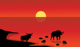 Silhouette of bull in lake Stock Photography