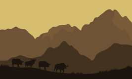 Silhouette of bull in mountain Royalty Free Stock Image