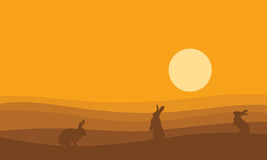 Silhouette of bunny on desert at sunset Stock Photography