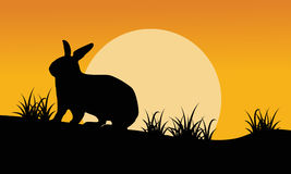 Silhouette of bunny and grass at sunset Stock Images