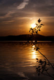 Silhouette of a bush. Against the background of a mountain lake at sunset Royalty Free Stock Image