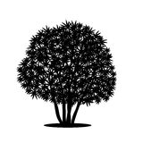 Silhouette bush with leaves and shadow Royalty Free Stock Images