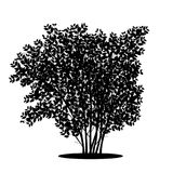 Silhouette bush with leaves and shadow. On white background royalty free illustration