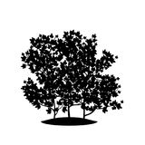 Silhouette bush with leaves and shadow Royalty Free Stock Photo