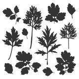 Silhouette of bush leaves. Vector illustration stock illustration