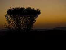 Silhouette of bush in Malolotja Stock Image