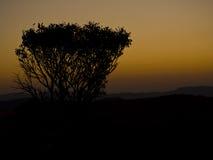 Silhouette of bush in Malolotja Stock Image