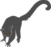 Silhouette of bushbaby Stock Photography