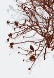 Silhouette of bushes of wild roses in winter Stock Photo
