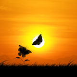 Silhouette, butterflies and flowers against a backdrop beautiful sunset. Royalty Free Stock Photos