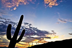 Silhouette of cactus in Desert sunset lit sky Stock Images