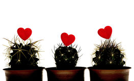 Silhouette Cactuss with Red Heart  on White background Stock Photo