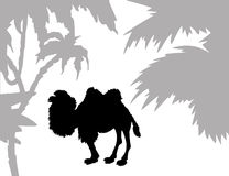 Silhouette camel Stock Image