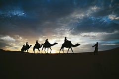Silhouette of camel caravan on sand dune with unset. Silhouette of camel caravan on sand dune with sunset as background royalty free stock photos