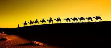 Silhouette of a camel caravan. Camel caravan silhouette through the sand dunes in the Sahara Desert, Morocco Royalty Free Stock Photography