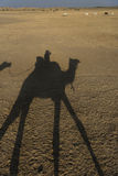 Silhouette of a camel and rider Royalty Free Stock Images
