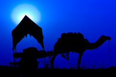 Silhouette camel at sunset in India . Stock Image