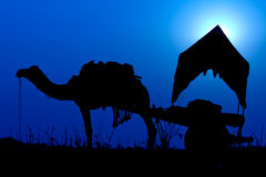 Silhouette camel at sunset in India . Royalty Free Stock Photography