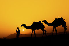 Silhouette of the Camel Trader across the sand dune. Royalty Free Stock Image