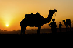 Silhouette of the Camel Trader across the sand dune. Royalty Free Stock Photography