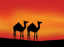 Silhouette of Camels. An illustration featuring a evening scene & two camels Royalty Free Stock Photos