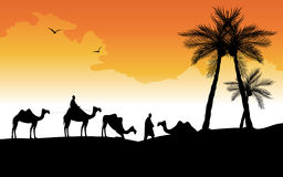 Silhouette of camels Stock Images