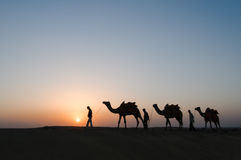 Silhouette camels in Thar desert Stock Photography